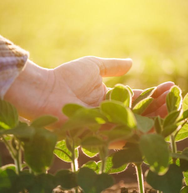 影响作物根系吸收养分的因素有哪些
